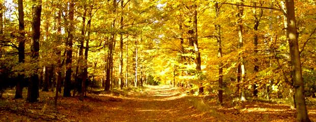 Lasy jesienią